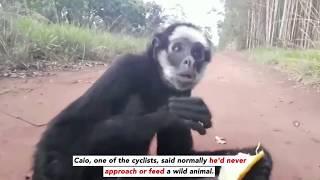 Download Spider Monkey Rescued Video