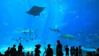 Download The World's Largest Aquarium // Georgia Aquarium // Atlanta GA Video