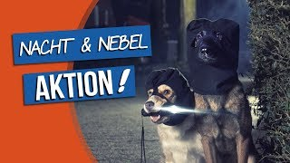 Download bosch | Fruitees - Der fruchtige Hundesnack #3 ″Nacht & Nebel Aktion!″ Video