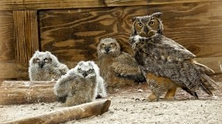 Download ONE Central Florida Short: Owl Super Mom Video