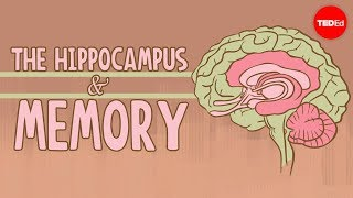Download What happens when you remove the hippocampus? - Sam Kean Video