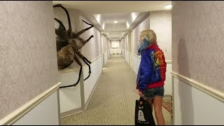 Download World's largest Spider Ever Video