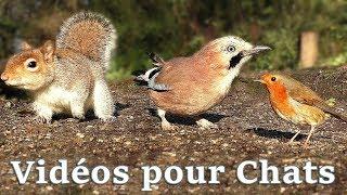 Download Vidéos Pour Les Chats à Surveiller : Petits Oiseaux Partout Video