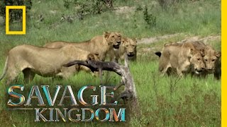 Download A Pride Divided | Savage Kingdom Video