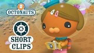Download Octonauts: Dashi Has An Accident Video
