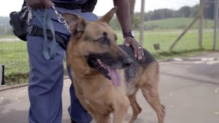 Download Police Dog's Amazing Transformation: How Max' Skin Condition Was Cured! Video