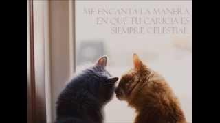 Download Camera Obscura - I love how you love me (subtitulado) Video