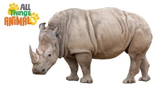 Download RHINO: Animals for children. Kids videos. Kindergarten | Preschool learning Video