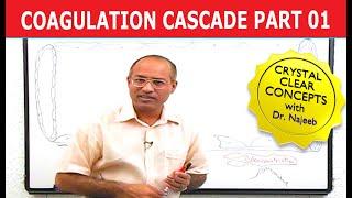 Download Coagulation Cascade - Part 1/12 Video