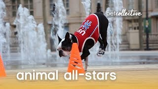 Download Animal All-Stars | The Pet Collective Video
