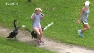 Download Schwan-Attacken (Part27) Schloss Ringenberg - angry swan attacks Video