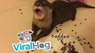 Download Otter Pup Snack Time || ViralHog Video