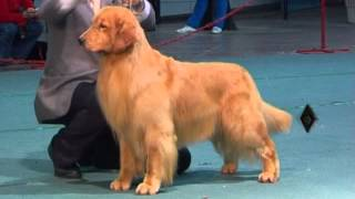 Download ″Perros en acción″ Kennel Club Santa Fe Video