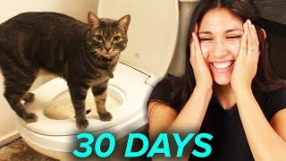 Download I Tried Training My Cat To Use A Toilet In 30 Days Video