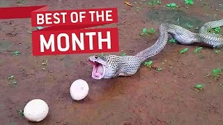 Download Best Videos Compilation September 2016 || JukinVideo Video