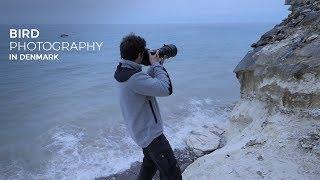 Download BIRD PHOTOGRAPHY in Denmark Video