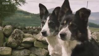 Download Countryfile - One Man & His Dog 2017 - Team Scotland Video