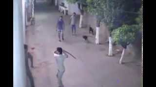 Download NEW GANG FIGHT AT CAMPUS WITH KNIFES Video