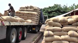 Download Cashew, Land & Food Security (University of Reading) Video