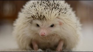 Download Life From a Hedgehog's Eyes Video
