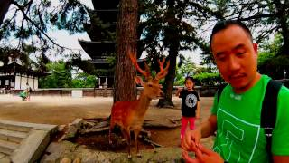 Download Japan 2016 (GoPro) Video