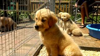 Download Warrior Canine Connection Puppy Visit Video