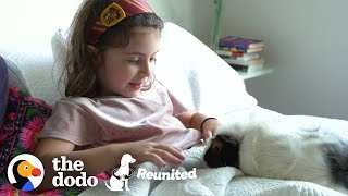 Download Little Girl And Guinea Pig Are The Cutest Pen Pals | The Dodo Reunited Season 2 Video