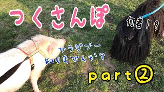 Download 【ミニブタ】つくさんぽ♡パート2 【つくね】Mini Pig Video