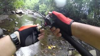 Download Kelah   Pelian   Golden Mahseer in Sabah Video