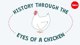 Download History through the eyes of a chicken - Chris A. Kniesly Video