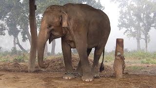Download Nepal (12/2013) - Chitwan National Park Video