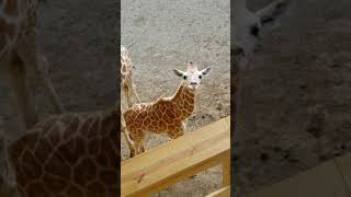 Download August 24, 2019 April and sons Animal Adventure Park Video