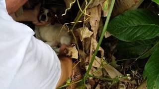 Download Cadela Resgatada em um Bananal com 6 filhotes Video