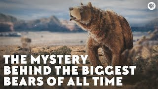 Download The Mystery Behind the Biggest Bears of All Time Video