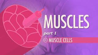 Download Muscles, Part 1 - Muscle Cells: Crash Course A&P #21 Video