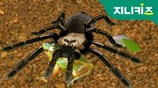 Download 털복숭이 타란튤라(Tarantula) vs 대모벌 | 생생자연도감 | 어린이 자연관찰 Kids Science | 지니키즈★과학동화 Video
