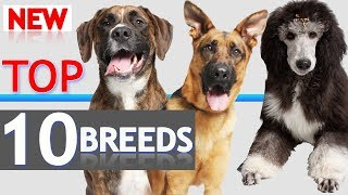 Download Top 10 Dogs Video