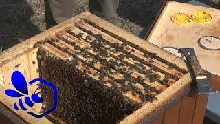 Download Pasieka Początkującego Pszczelarza - #22 Główny przegląd wiosenny - kwiecień 2015 Video