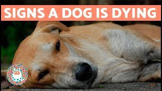 Download How to Know if Your Dog is Going to Die Video