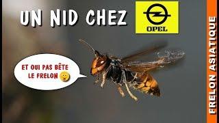 Download GROS Nid de Frelon chez OPEL Mirail à TOULOUSE 😮 Video