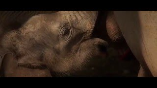 Download When Elephants Were Young Trailer 2016 Video