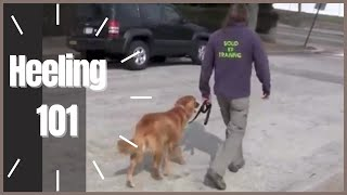 Download Heeling 101 How To- Solid K9 Training Video