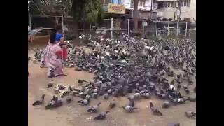 Download Pigeons World, Hyderabad Video