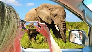 Download HOW TO SAFARI in KRUGER NATIONAL PARK | South Africa Vacation Video