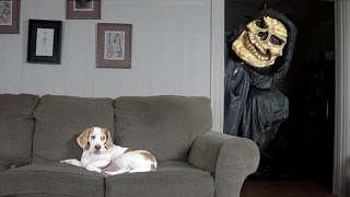 Download Dog Not Scared of Grim Reaper: Funny Dog Maymo Video