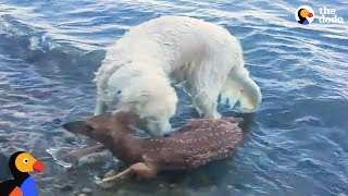 Download Animals Rescue Other Animals In Need | The Dodo Top 5 Video