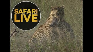 Download safariLIVE - Sunrise Safari - May, 26. 2018 Video