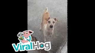 Download Mama Dog Begs, Brings Food Back to Pups || ViralHog Video