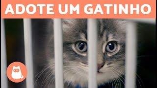 Download 10 motivos para ADOTAR um GATO 🐱 Video