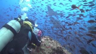 Download Galapagos Diving 2013 Video